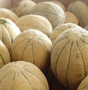 rockmelons